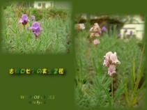 DSCF0169 2007.10.31
