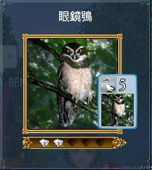 發現物的眼鏡鴞