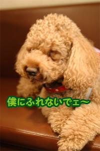 20060319_04.jpg