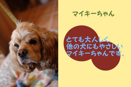 20060326_02.jpg