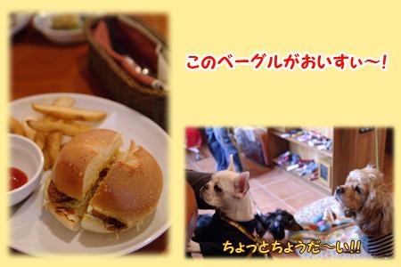 20060326_03.jpg