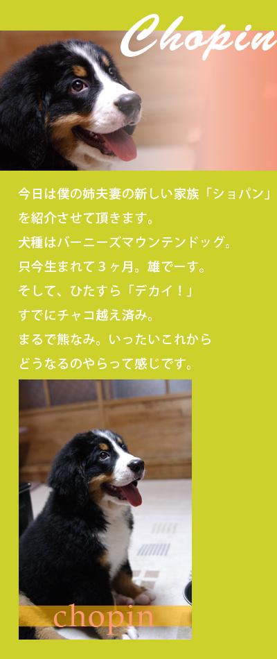 20060813_01.jpg