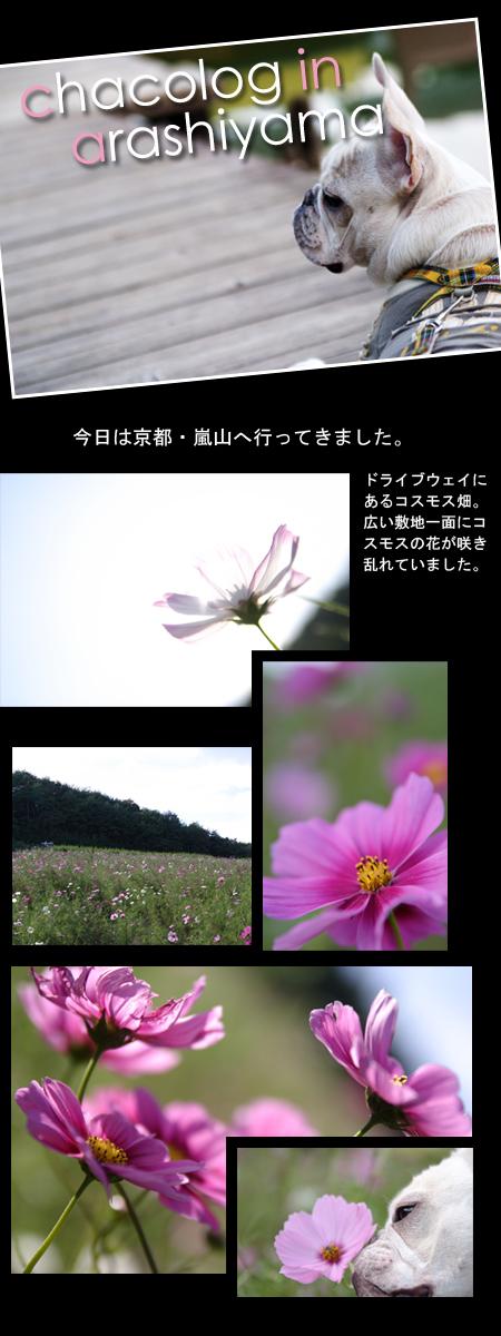 20061015_01.jpg