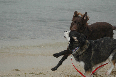琵琶湖で遊ぶ2