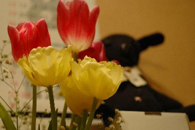 0125花