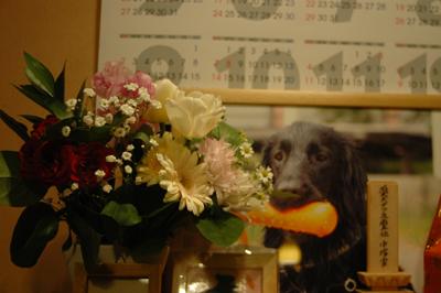 0225花