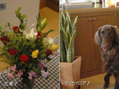 プレゼント花