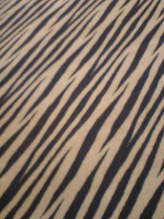 zebra05