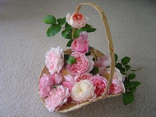 roserose2.jpg