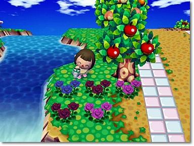 青バラが2つ咲きました♪