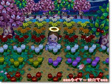 離れ小島は花園だった♪