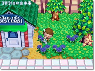 青バラは咲いたけど…