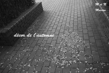 automne03.jpg