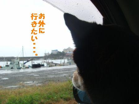 港を眺めるちき
