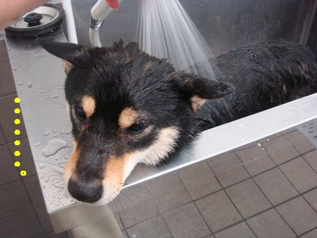 シャワーりん