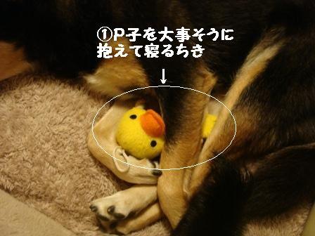 ちきとP子(大)