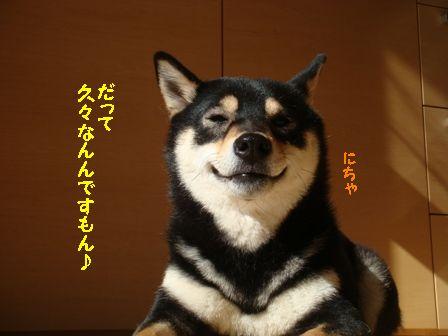 ひなたぼっこ凜2