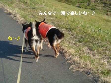 一緒に散歩♪