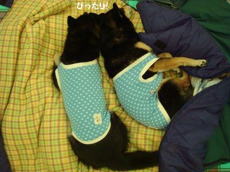 寝袋ちきりん2