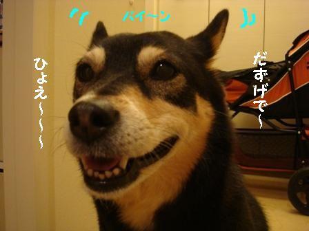 バイ~ンちき
