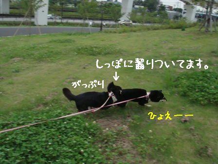 遊ぶちきりん 5