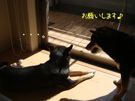 ちき姉お願い日向2