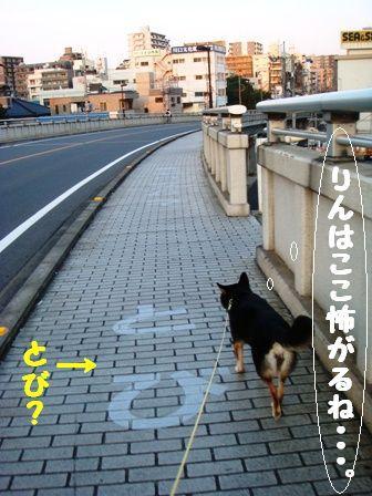 DSC03413.jpg