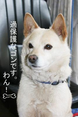 名称未設定-1sakura1