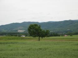 一本の木 ん~~、北海道風景です(^^)