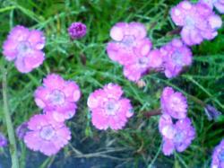 かわいい花が咲き乱れています(^^)