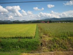 左は稲、右はそば