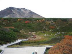 昨年(2006年)の紅葉 旭岳