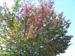 秋の空に紅葉した葉