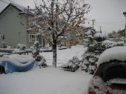 雪が積もりました(¨;)