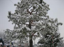 まだ気温が低くないのでしめった雪が積もっています