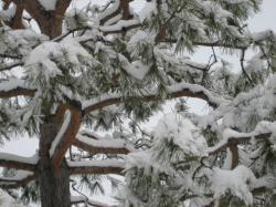 雪をかぶって・・・~旭川~