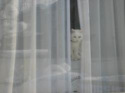 ちょびが「お帰り~」と言っているのかどうか・・・(__;)