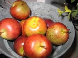小さなリンゴ・・・オーナメントです(^^)