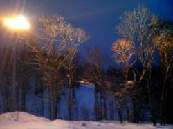 ナイター照明に木々がきれいです