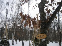 旭川 冬の神楽岡公園