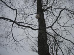 木に鳥の巣箱(^^)