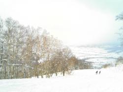 木々が美しいスキー場です♪