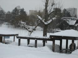 池が凍った常盤公園に