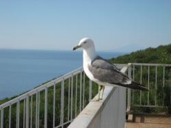 赤磐展望台 海鳥がたくさんいます♪