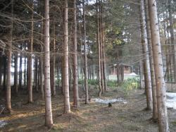 森林散策路