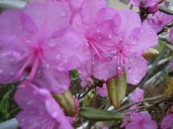 雨の滴が花びらに