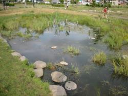 池ではオタマジャクシを採る子どもたちが(^^)