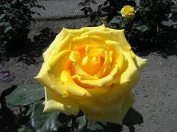 黄色があざやか(*^_^*)