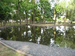 公園の池には・・・