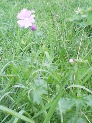 堤防にこんな花も咲いていました